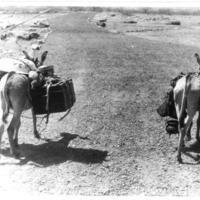 id [Nandulli]  - ânes porteurs