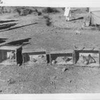 [Ethiopie ]  -( Gondar - 15 octobre  1932) Oiseaux, ménagerie